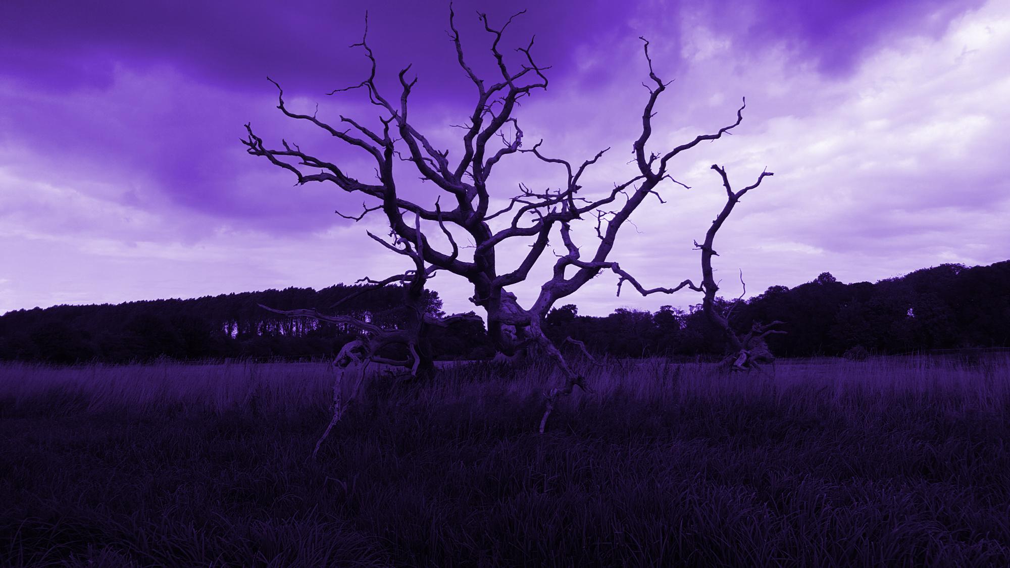 Episode 46 – Road Trip: Haunted Norfolk